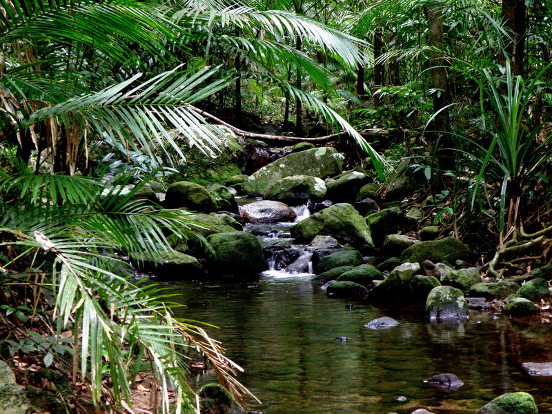 Rainforest Daintree National Park